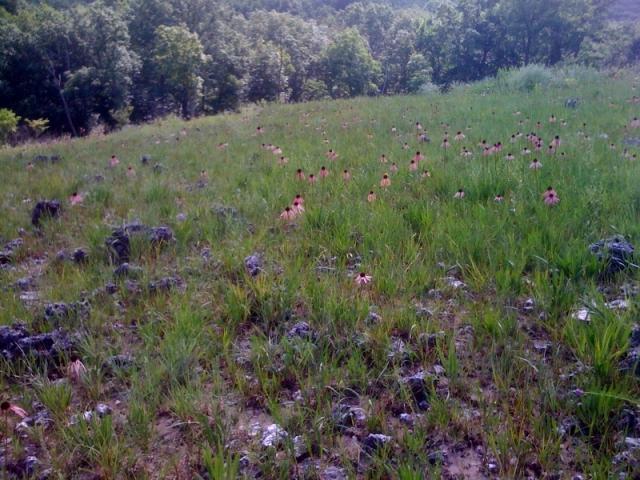 Ozark Glade in Meramec SP, Missouri