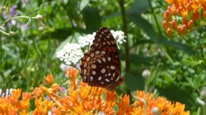Aphrodite Frit FIG 2013 July 5