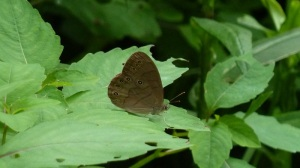 Appalachian Brown on Blue Lick Rd