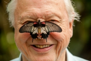 Sir David Attenborough is president of Butterfly Conservation