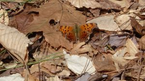 2014 Mar 15 Comma ACLT Calvert Co
