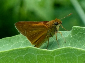 Dion Skipper 2014 June 14 at Friendship Farm, Charles Co MD.  Photo by Tom Stock.