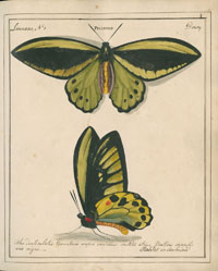 Plate from V1 of Jones Icones