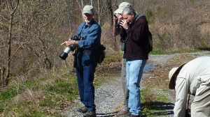 Matt Orsie points out another Appalachian Grizzled Skipper.