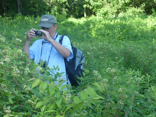 Tom in the Hairstreak Corner, not content with Hickory, Banded and Striped but intent on picking out an Oak Hairstreak.