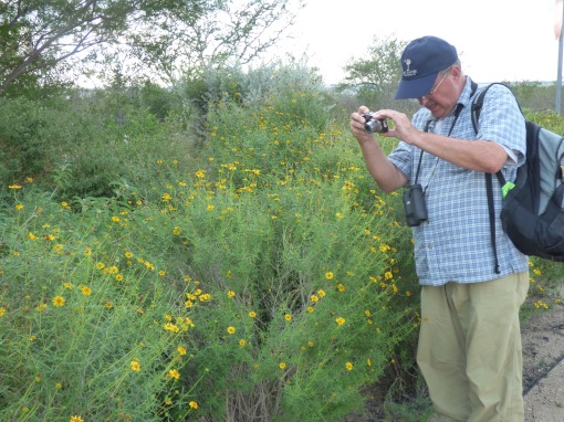 Tom narrowing in on a checkerspot in the Falcon State Park butterfly garden.  Here again, we could only come to an ID on the small checkerspots there by netting one and examining it carefully in a plastic bag before releasing it [2015 Nov 4, photo by REB]