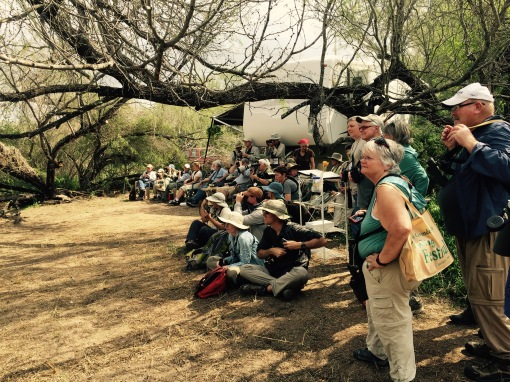 A crowd from the Rio Grande Valley birding festival descends on the feeding stations at Salineno