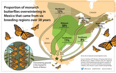 monarchbutterfly-ig1-final-450x285